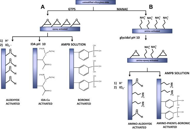 Anal Biochem. 2014; 450C: 37-45
