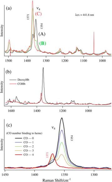 Hemoglobin Yakima Dissociation Curve