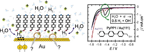 Enhanced hydrogen evolution rate after desorption of thiol SAMs caused by water structuring near the interface
