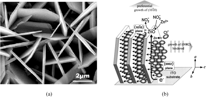 SEM image of plate-shaped ZnO electrodeposited from aqueous solutions containing ...