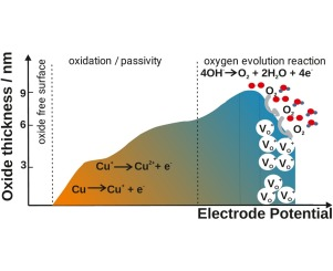 Oxygen evolution and transpassive dissolution of copper