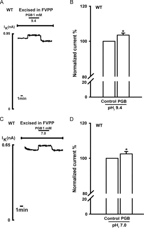 s n methyl pregabalin mechanism