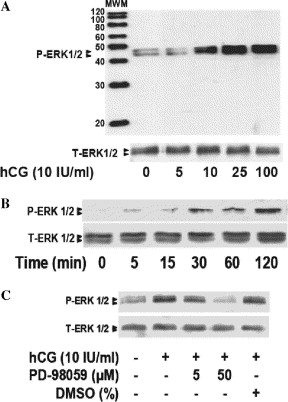 hcg 120 what does it mean.