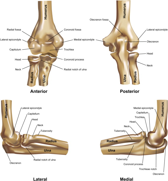 Elbow joint biomechanics for preclinical evaluation of total elbow ...