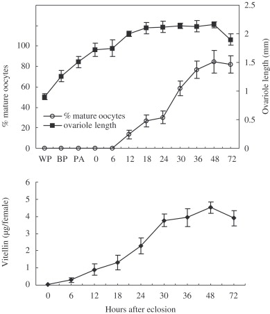 The growth of ovariole length and mature oocyte during the pupal and adult ...
