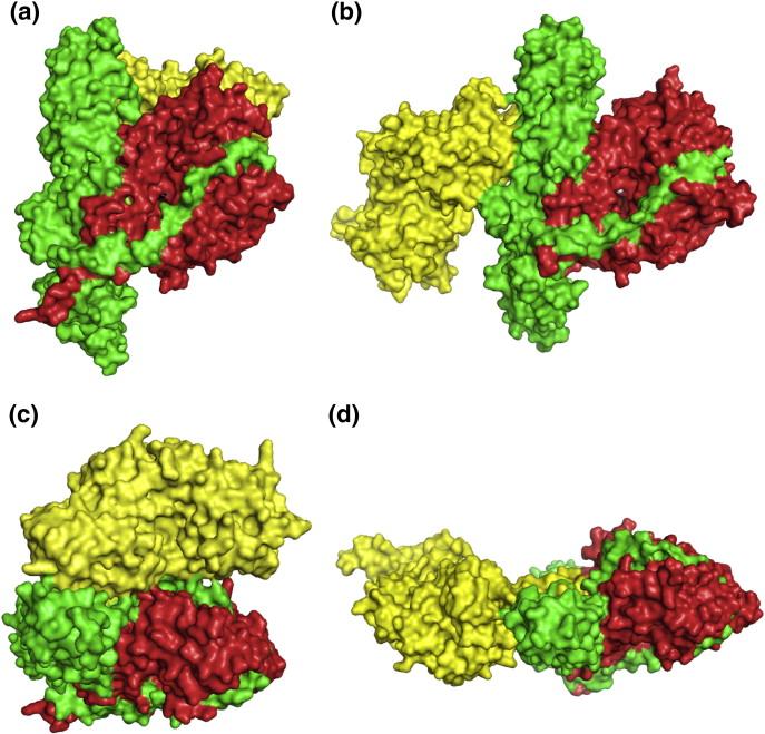Clostridium Botulinum Morphology