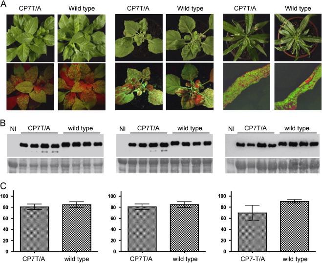 Virology. 2013 Aug 1;442(2):122-31