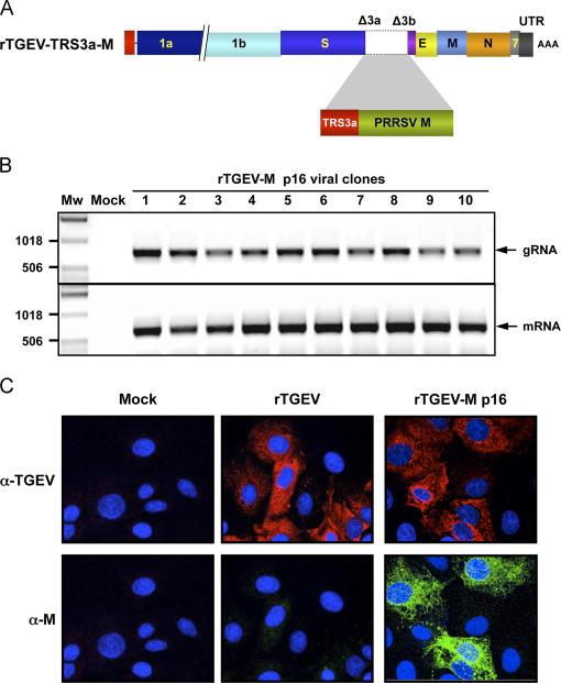 Virology. 2014; 464-465C: 274-286