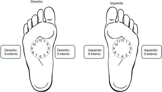 Ilustración de la localización de las horas del reloj en el miembro inferior ...