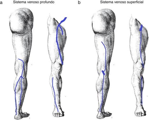 Representación del sistema venoso (a) profundo y (b) superficial para el ...
