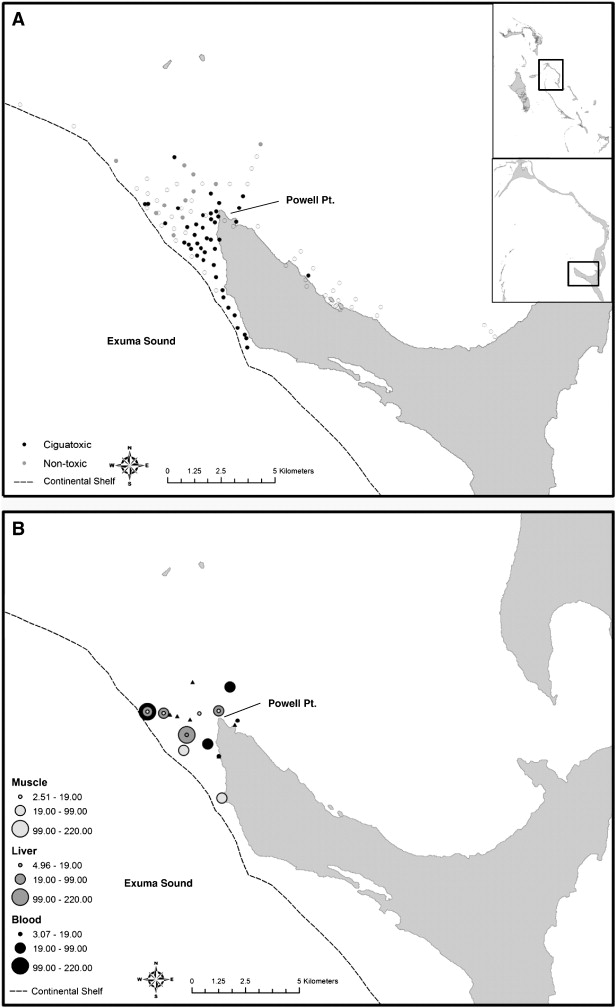 Spatial distribution and ecology of S. barracuda for ciguatoxin analysis near Cape Eleuthera, The Bahamas. A) Receiver stations at which telemetered barracuda were detected during the study period. Black circles represent stations that were visited by fish that tested positive for blood ciguatoxin and grey circles represent stations that had fish which did not exhibit ciguatoxin like activity. Open circles represent receiver stations included in the telemetry array during the study period that were not visited by tagged barracuda. B) Individual barracuda capture locations with associated muscle, liver, and blood CTX concentrations (pg/ml). Black filled triangles represent capture locations for barracuda that did not test positive for CTX. source: http://ars.els-cdn.com/content/image/1-s2.0-S0048969711013684-gr2.jpg
