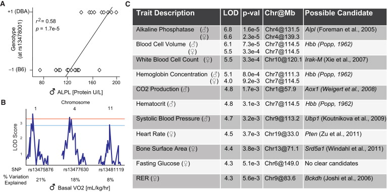 Genetic Trait Chart
