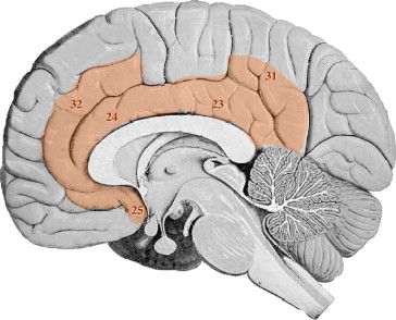 assessing the role of cingulate cortex in bipolar disorder, Cephalic Vein