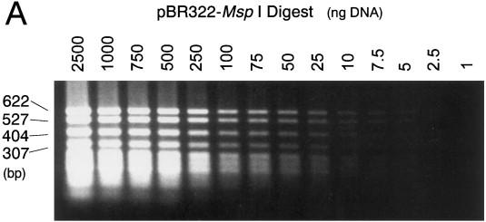 ... ethidium bromide, then photographed using a UV-transilluminator (A).