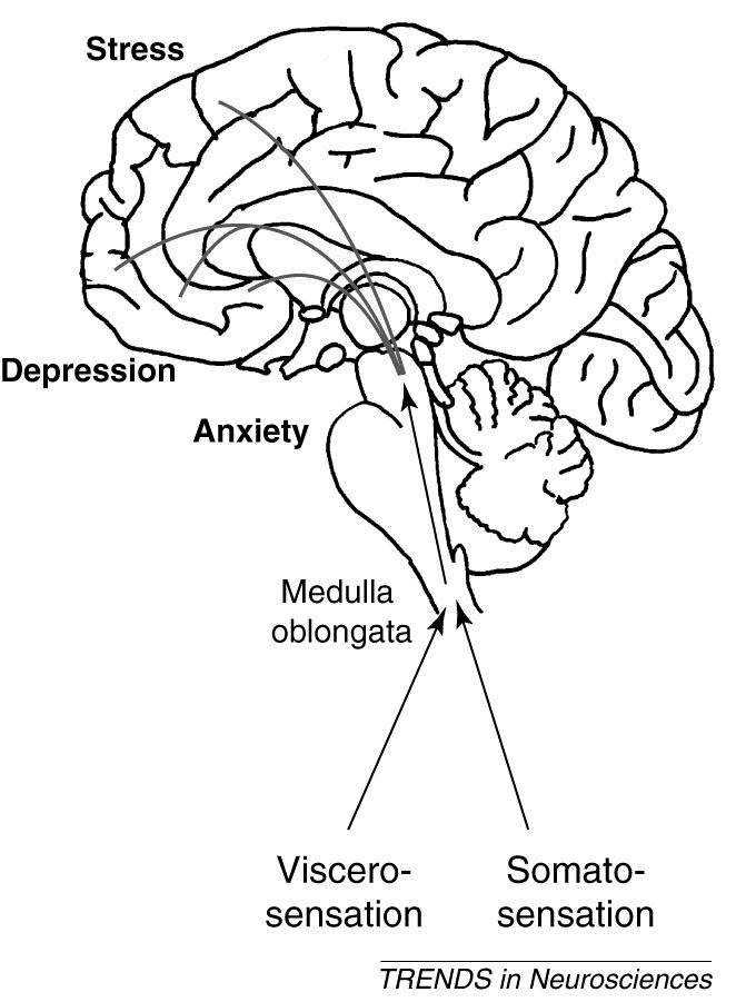 Medulla Oblongata Cognitive Disorders