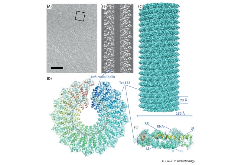 The physics of tobacco mosaic virus and virus-based devices in ...