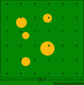 1 s2.0 S0169534700018747 gr3 I) of five adult trees (green circles) in which seed rain is quantified ...