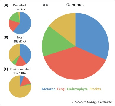 The others: our biased perspective of eukaryotic genomes