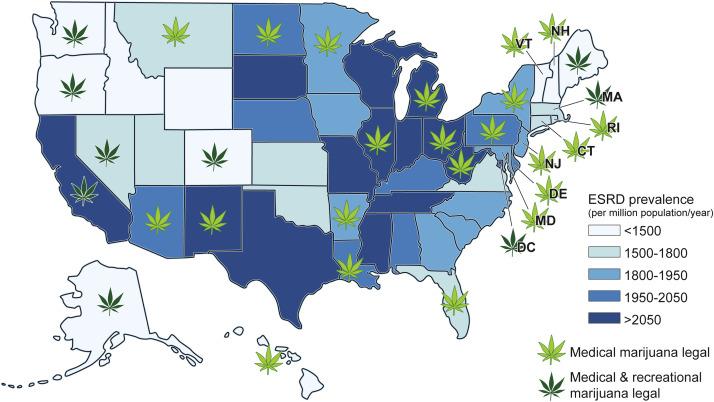 Potential Impact Of Marijuana And Cannabinoid Use On The Kidney