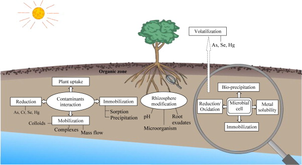 bioremediation processes