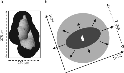 X-ray photoemission electron microscopy study of the in-plane spin ...