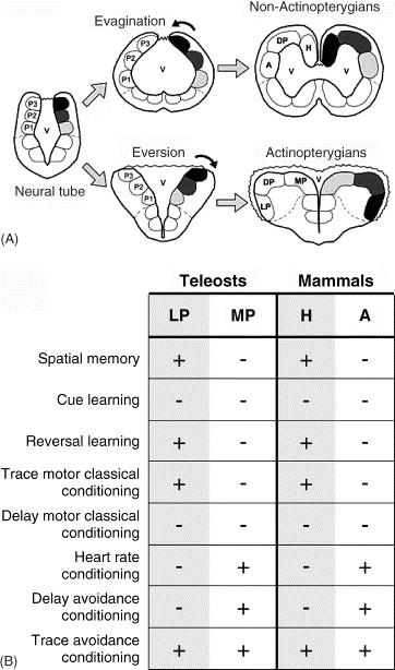 Comparative Correlative Neuroanatomy Of The Vertebrate Telencephalon Download. legal Etica Myers Recibe used toric field