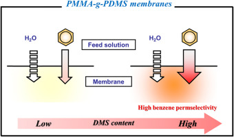 Selective removal of dilute benzene from water by poly(methyl ...