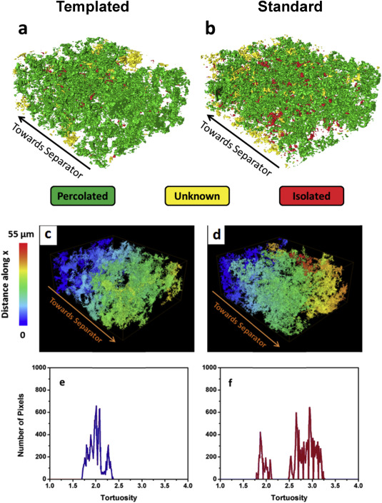 3D image reconstructions showing the directional connectivity of the CB phase of ...