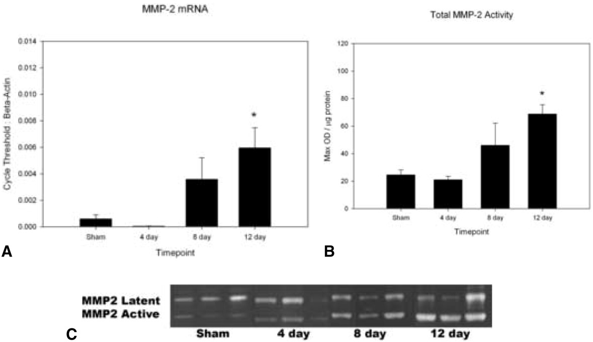 vein wall remodeling after deep vein thrombosis involves matrix matrix metalloproteinase 2 mmp 2 expression and activity data are means