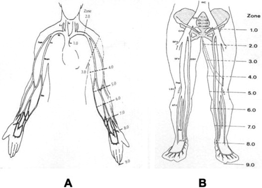 the hemodynamics and diagnosis of venous disease - sciencedirect, Cephalic Vein