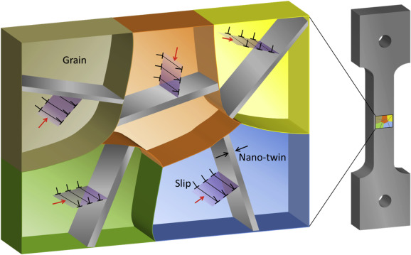 Annealing nano-twins obstructing slip. Differently oriented grains have ...