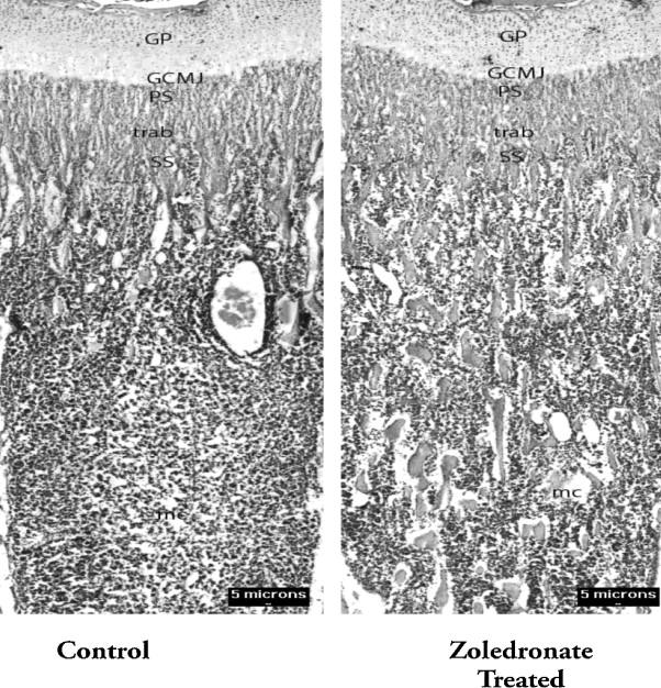 Full-size image (187 K)