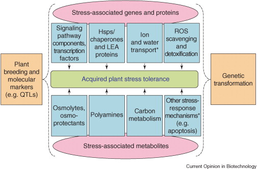 Stress Tolerant Plants