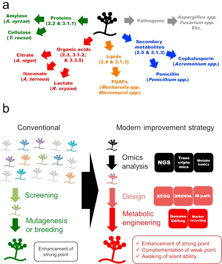 Future insights in fungal metabolic engineering