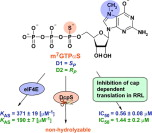Phosphorothioate analogs of m7GTP are enzymatically stable inhibitors of cap-dependent translation
