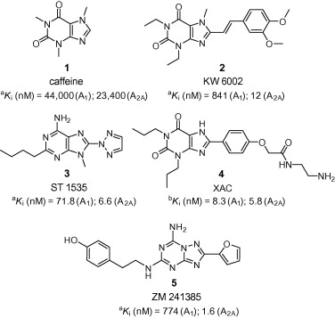 Chemical structures of some important adenosine receptor antagonists and their ...
