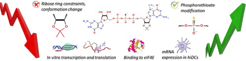 The synthesis of isopropylidene mRNA cap analogs modified with phosphorothioate moiety and their evaluation as promoters of mRNA translation