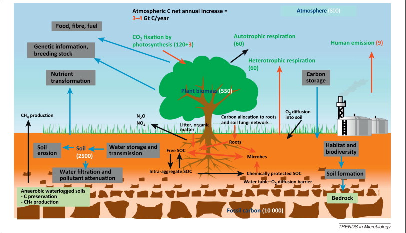Carbon sequestration photosynthesis and subsequent processes is a thesis statemetn