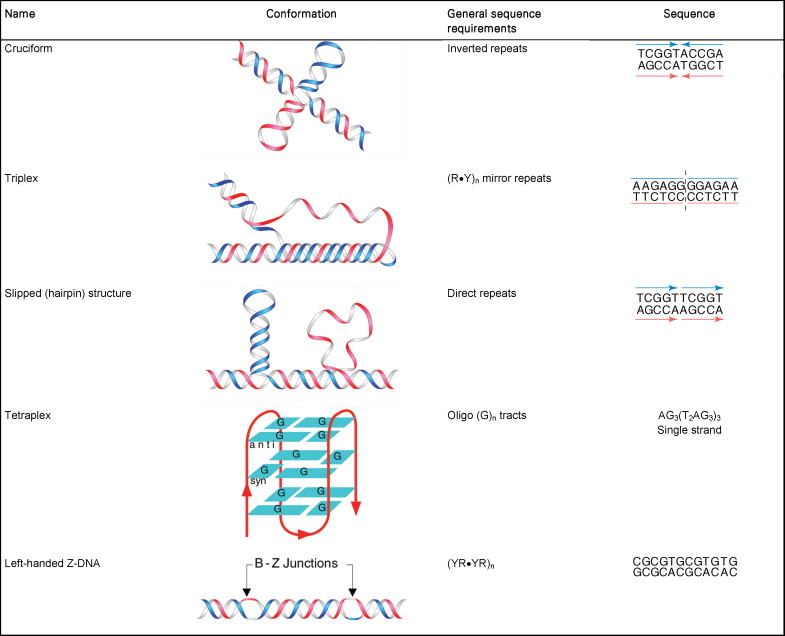 Non-B DNA conformations, mutagenesis and disease