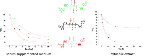 Synthesis and evaluation of stability of m3G-CAP analogues in serum-supplemented medium and cytosolic extract