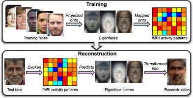 Extracción de imágenes de caras directamente del cerebro