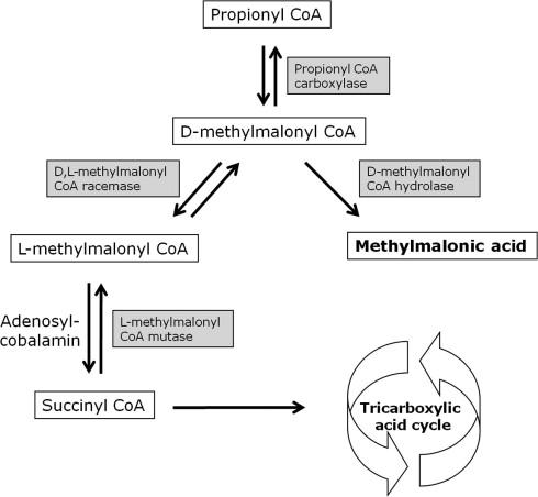 association between serum cobalamin and methylmalonic acid, Skeleton