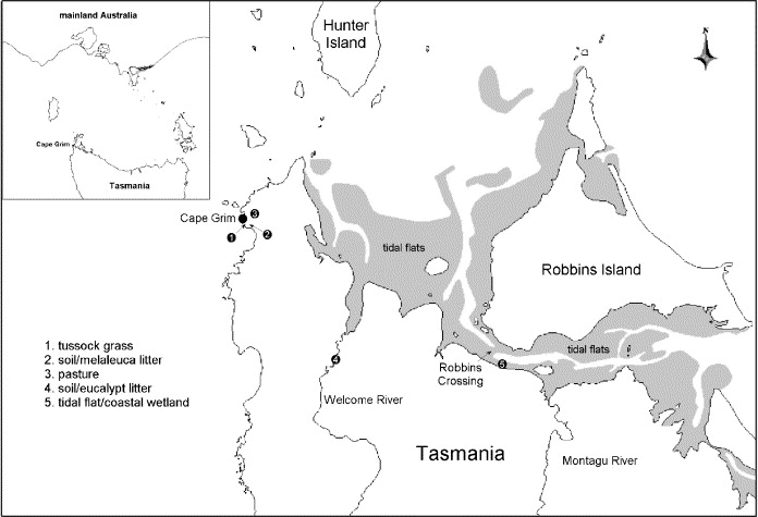 Terrestrial sources and sinks of halomethanes near Cape Grim
