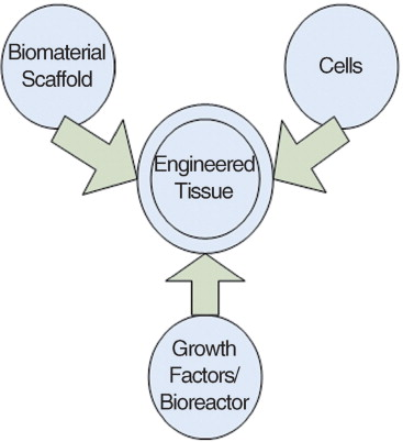 Biomaterials & scaffolds for tissue engineering - ScienceDirect