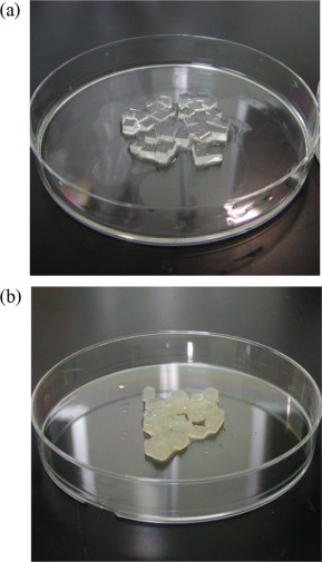 Photograph of the gel carriers entrapping Afipia sp. D1 before (a) and after (b) ...