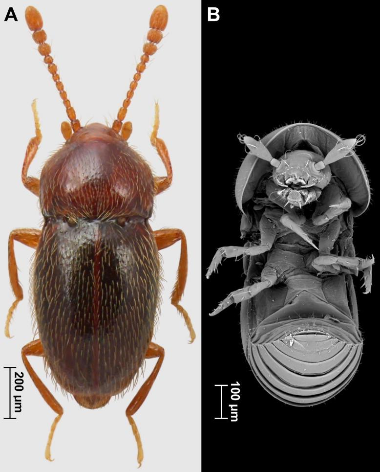(A) Adult; (B) larva. View thumbnail images