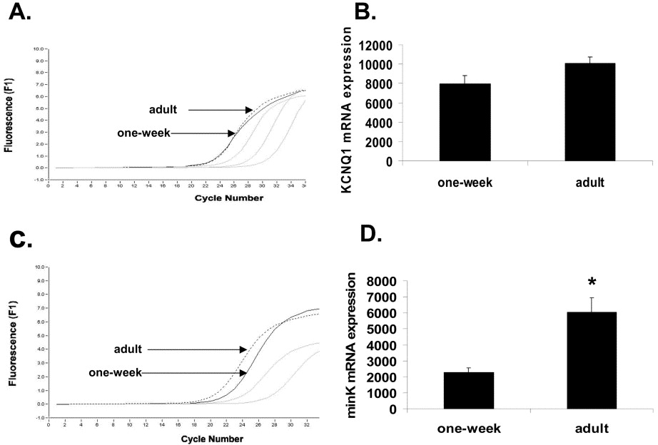 ... adult dog (dashed line). Gray curves represent serial dilutions (1:10, ...