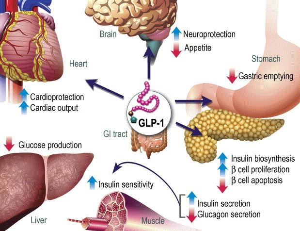 The biology of incretin hormones