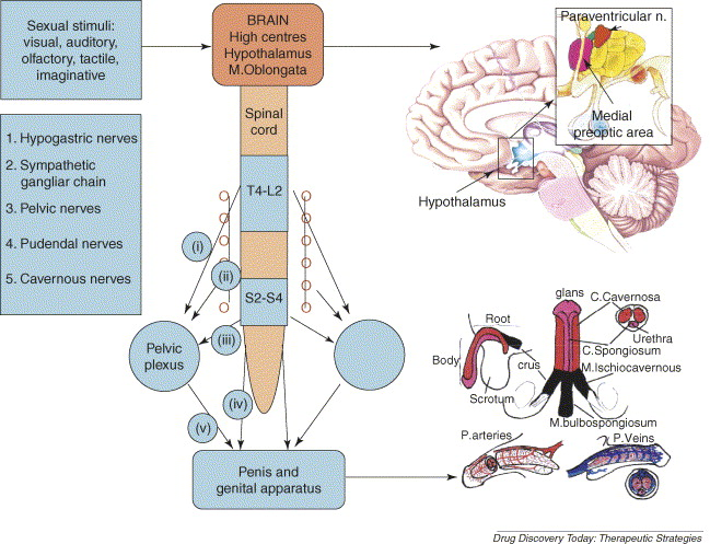 Underrated vid central nervous system drug penetration have