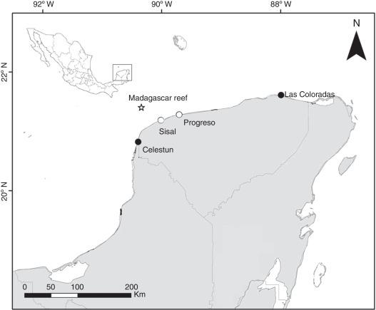Range extension of Sanopus reticulatus Teleostei Batrachoididae
